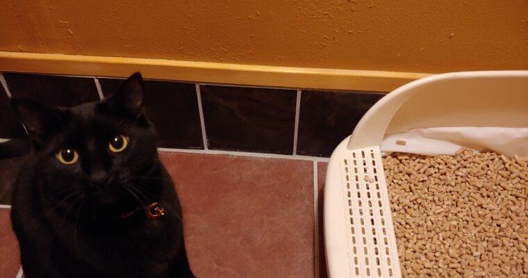 Zero Waste Pinene Cat Litter